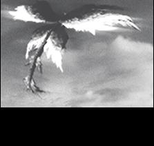 旧大陸で冒険者により撮影されたリーウーの全体像。この写真から全長30メートルであると推測される。
